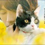 【旅猫リポート(たびねこリポート)】TV放送が観れない、佐賀県・大分県・沖縄県で無料視聴する方法